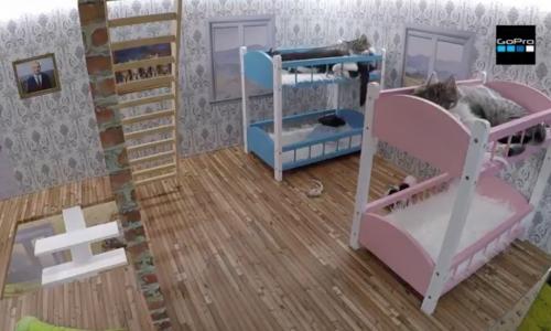 Vergeet kattencafés: Bekijk live dit nest met kittens (in een levensgroot poppenhuis!)