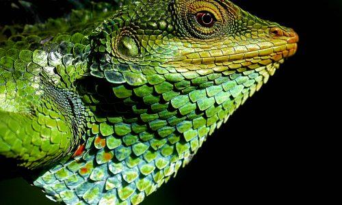 Wil jij binnenkort jouw foto zien in de National Geographic?