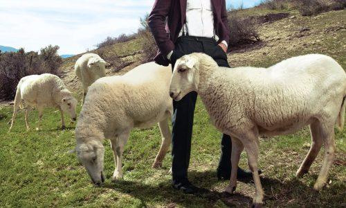 Vergeet bont: we moeten ons vooral zorgen maken om de wol-industrie