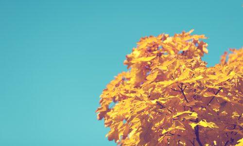 De herfst geeft de introvert in ons de rust die de zomer niet geven kan