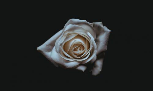Verwacht tijdens de Grammy's geen zwarte jurken maar witte rozen