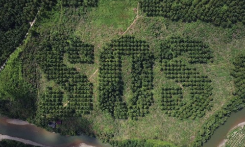 Save Our Souls: prachtige campagne tegen palmolie in samenwerking met Lush