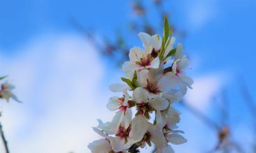 De nieuwste lente-trend: bloemen op je wenkbrauwen