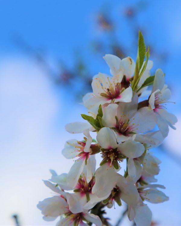 Bloemen #GardenEyebrows