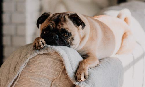 De beste bingewatch-maatjes? Dat zijn onze huisdieren