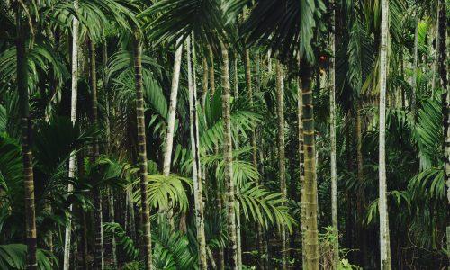 Grote banken investeerden jarenlang in verschillende palmoliebedrijven