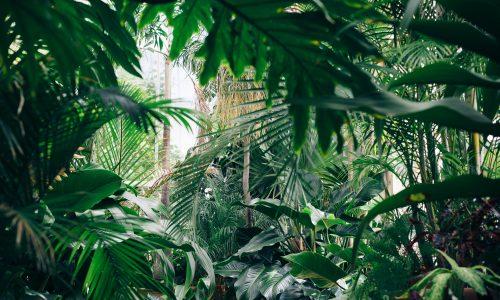 Kom tot rust in de groene oase van Plant Bathing Studio