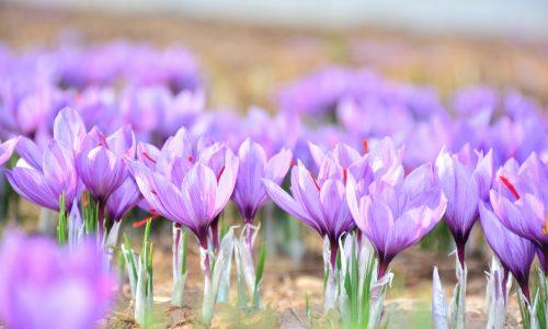 Is het al lente? De natuur ontwaakt en terrassen stromen vol