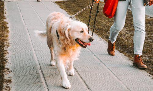 Het grootste voordeel van een hond: baasjes zijn gezonder