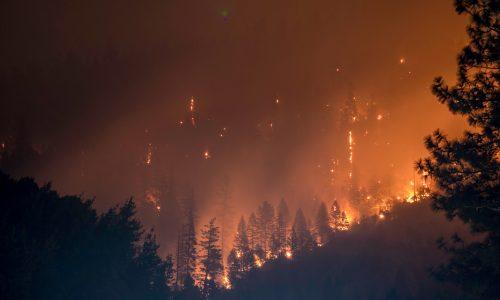 Recordaantal bosbranden in het Amazoneregenwoud
