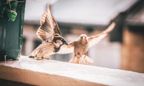 New York wil vogels beter tegen ramen beschermen met wetsvoorstel