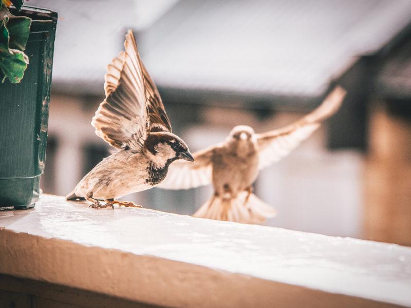 Vogels, raam, New York