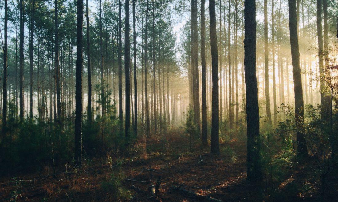 Kleine bossen