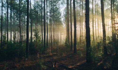 Kleine bossen blijken belangrijker te zijn dan gedacht