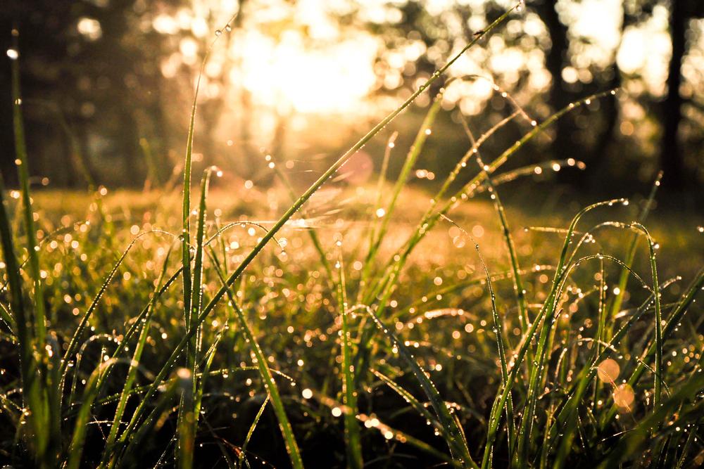 Lentefotografie, dauw in het gras