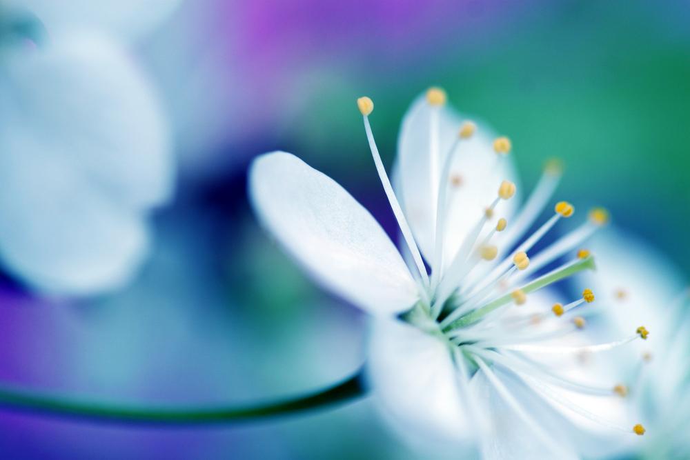 Macrofoto, bloem